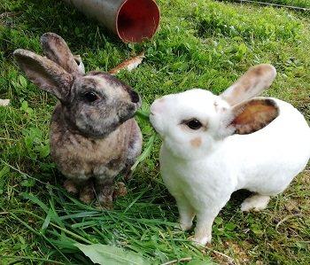 Bux & Bunny
