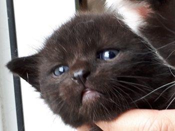 Babykatze Melba