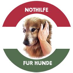 Herzlich Willkommen bei Nothilfe für Hunde e.V.